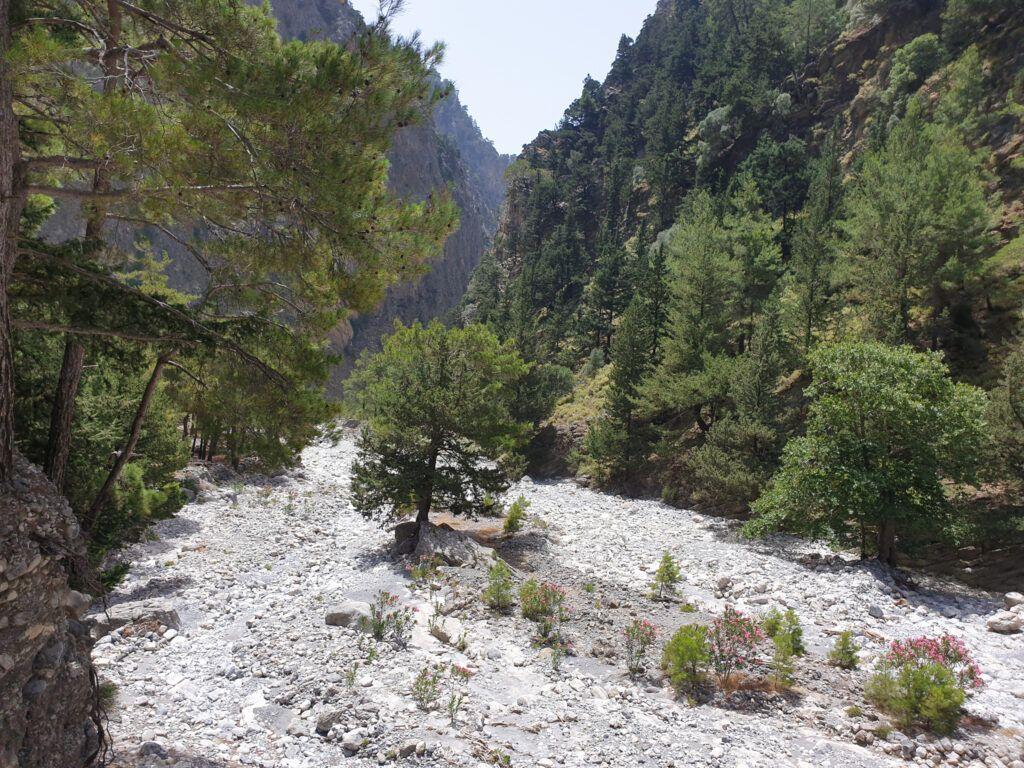 Wąwóz Samaria. Samotne drzewo