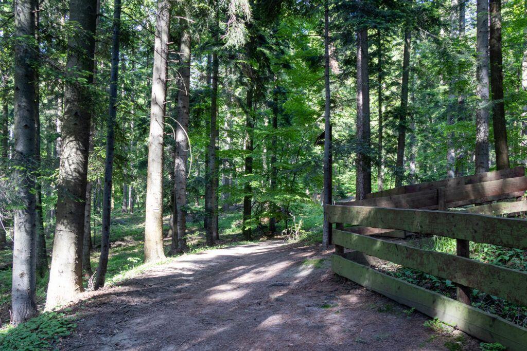 Zamek Kamieniec w Odrzykoniu. Droga do rezerwatu Prządki