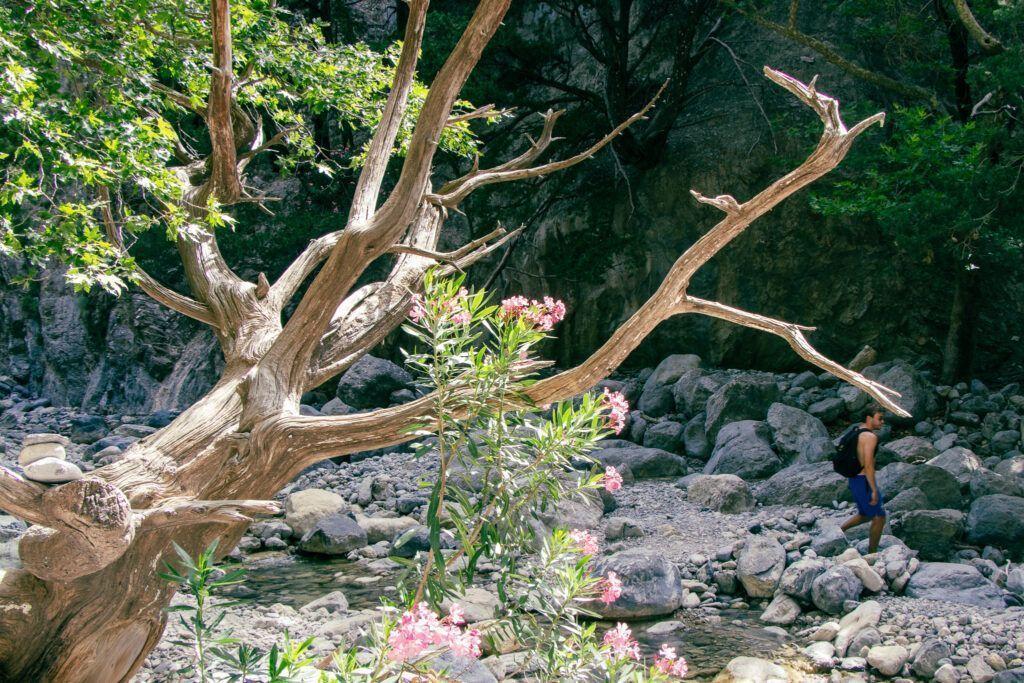 Wąwóz Samaria. Na dole